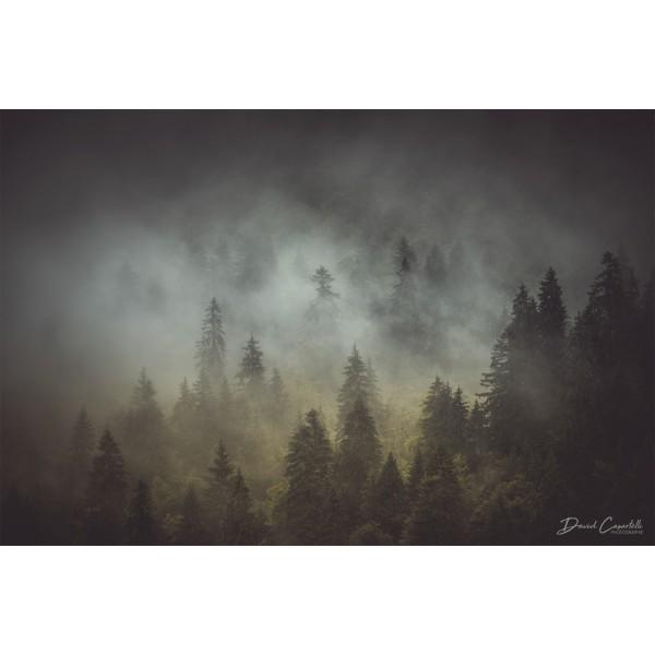 Brume sur la forêt